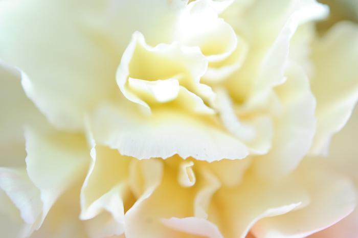 白い花の花びら