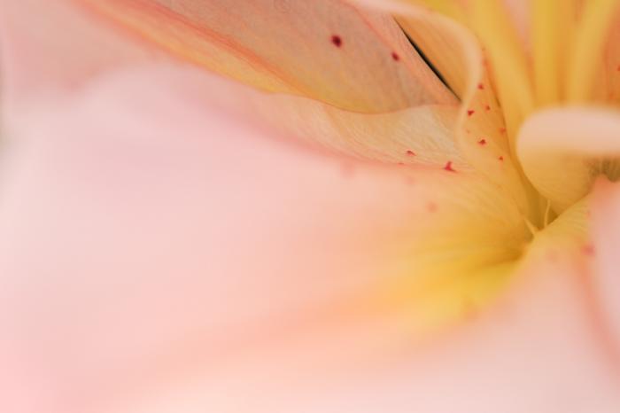 ピンク色の花の中心