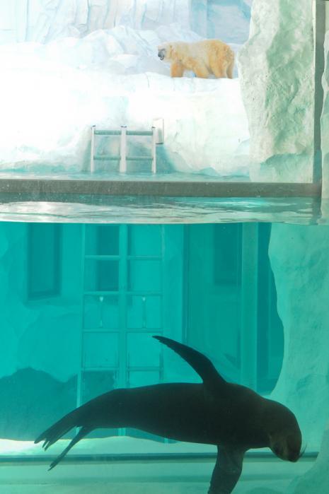 上野動物園「ホッキョクグマとアザラシの海」