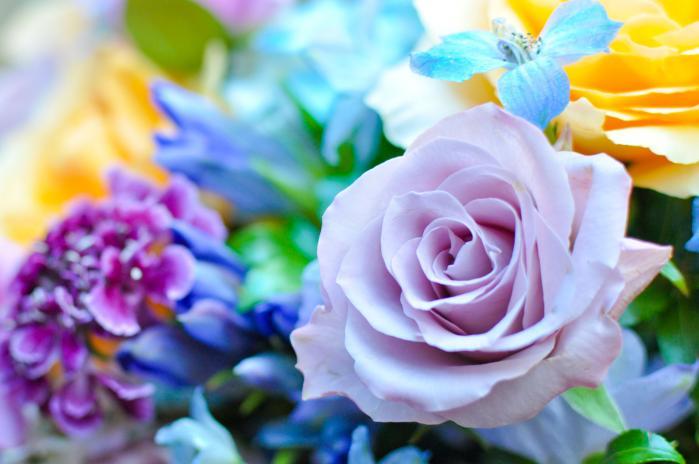 トワイライトのバラ