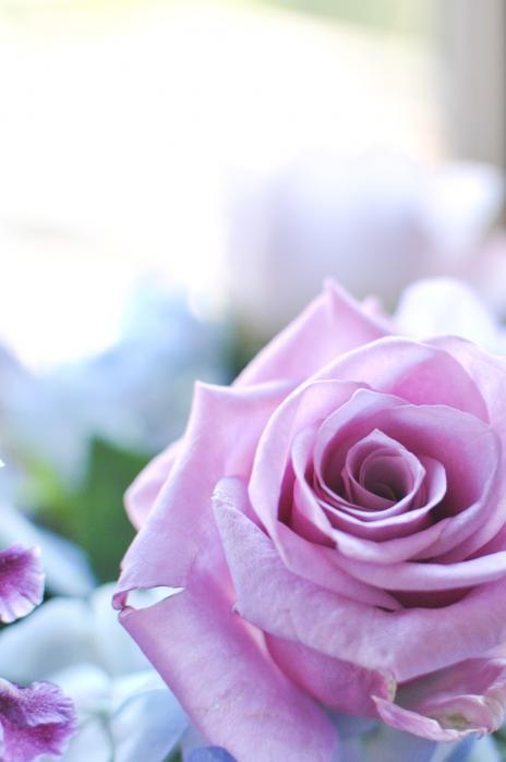 紫色のトワイライトイメージの薔薇