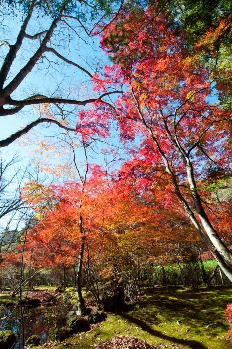 赤く色づく紅葉・軽井沢の紅葉002