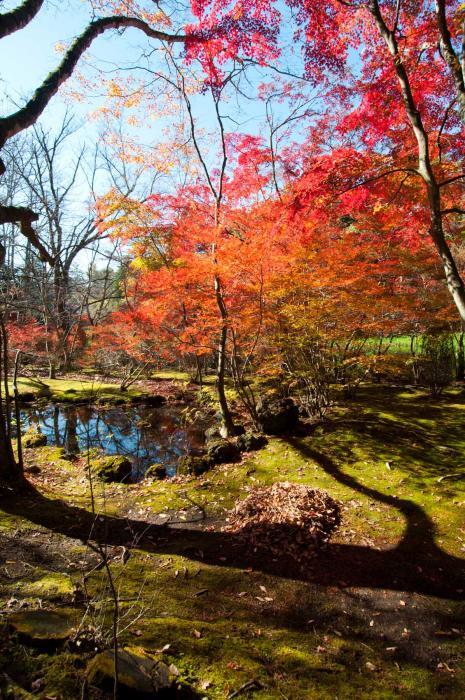 赤く色づく紅葉・軽井沢の紅葉003
