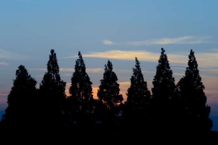 木立の向こうに淡い夕日