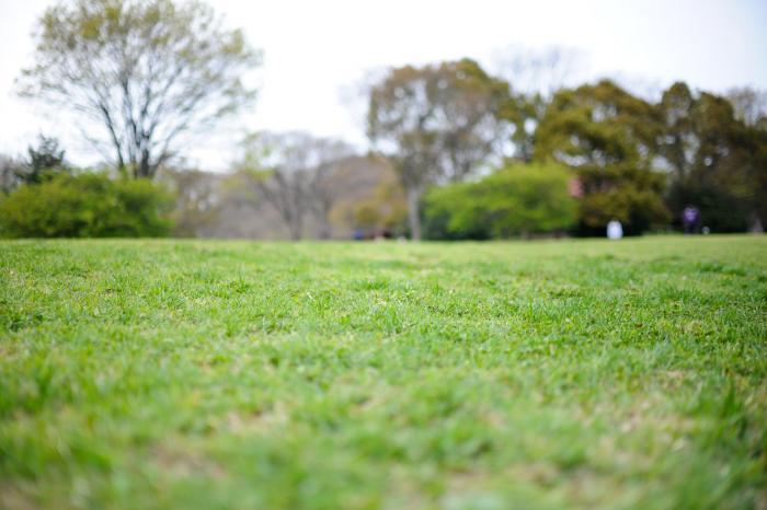 芝生広場で楽しく遊びたいな