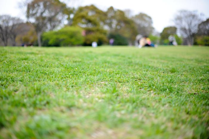 青々とした芝生広場
