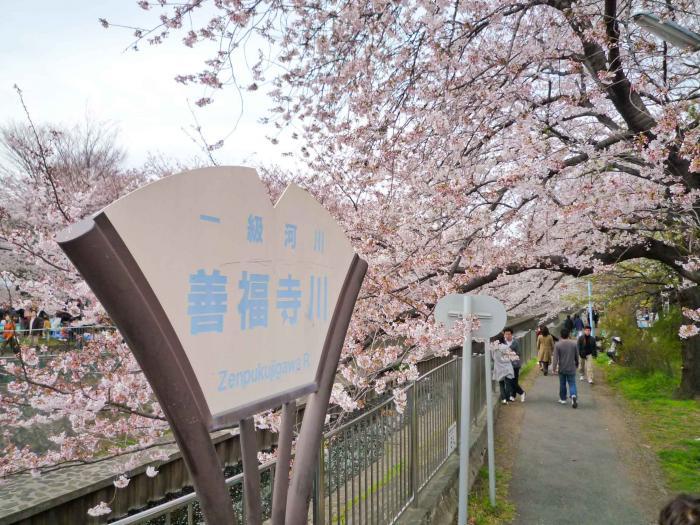 善福寺川の桜001