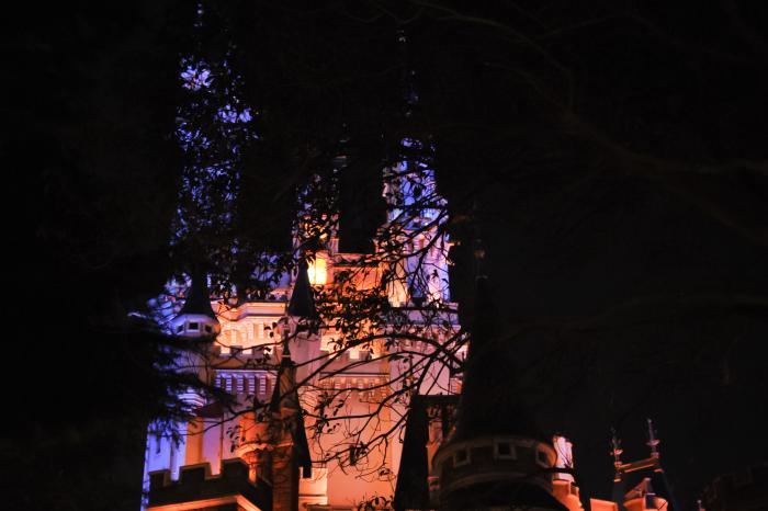 木の向こうにひっそりと佇むシンデレラ城