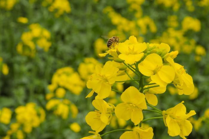 美味しい蜂蜜が出来るかな?