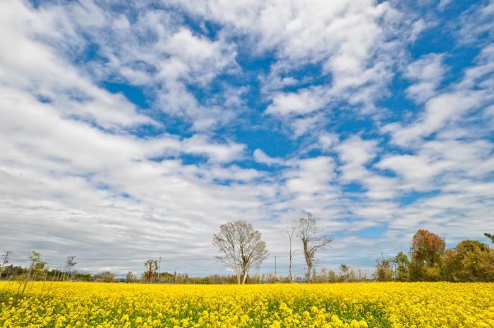 綺麗な青空と花畑