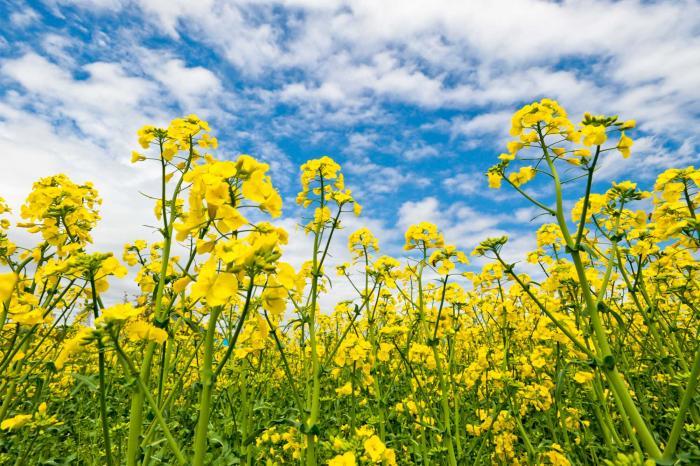 春の花の象徴