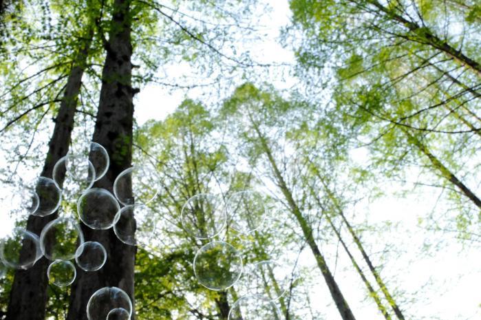 森林浴とシャボン玉のコラボレーション