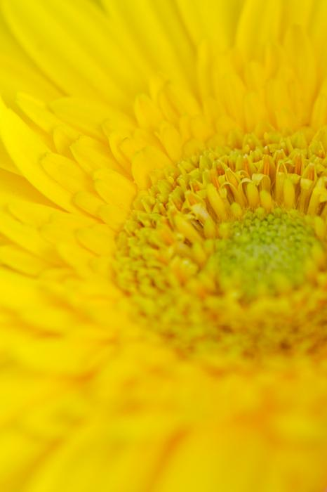 黄色の花のアップ