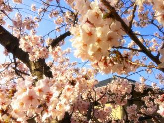 桜2_convert_20120412092240