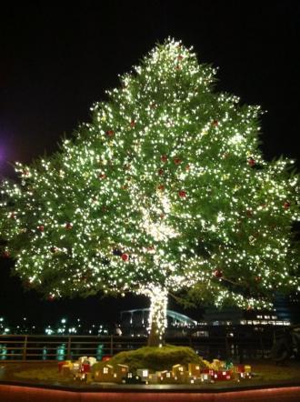 315882_53945クリスマスツリー