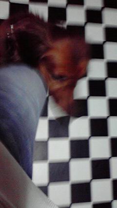 トリッキー(犬)