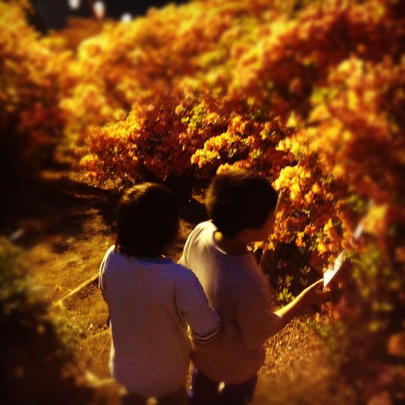 5写真_convert_20120518084949