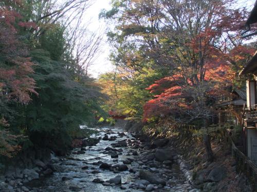 500川と紅葉DSCF7539