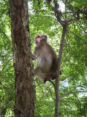 野生の猿DSCN0362