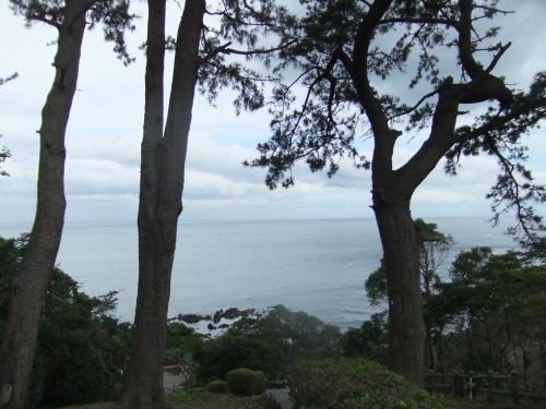 木と岬DSCF9002