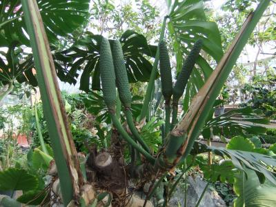 400植物DSCF2909