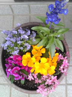 彩り 鉢植え