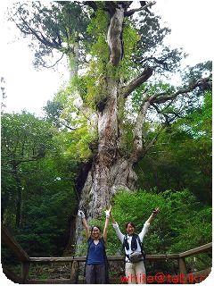 200910屋久島縄文杉