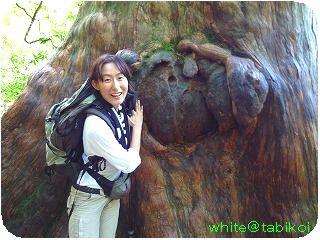 200910屋久島木の幹