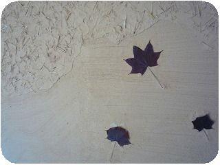 200907仙寿庵・壁