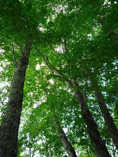 200907奥利根水源の森