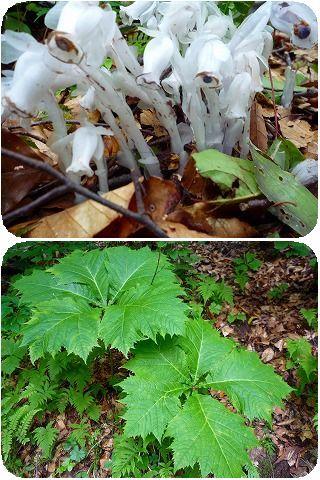 200907水源の森植物2種