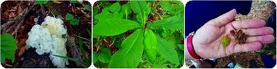 200907水源の森植物3連結