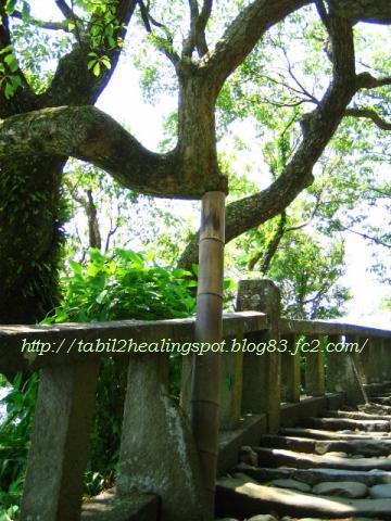 表参道の支え木