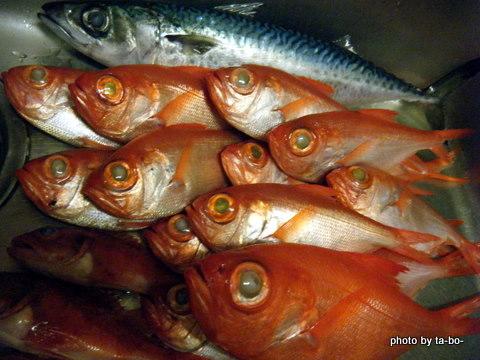 20111230本日の釣果