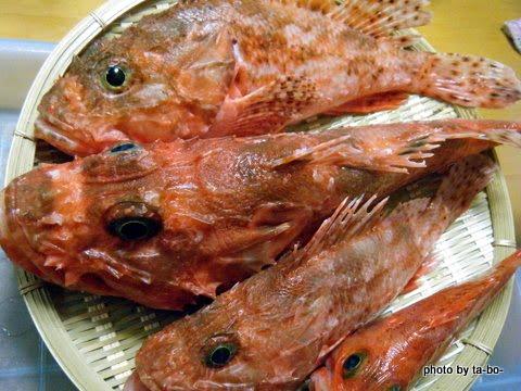 20120114本日の釣果