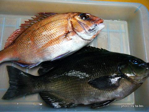 20120421本日の釣果