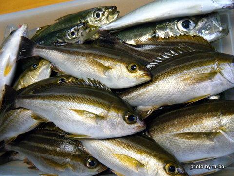 20120623本日の釣果