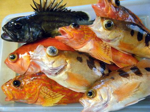 20120708本日の釣果