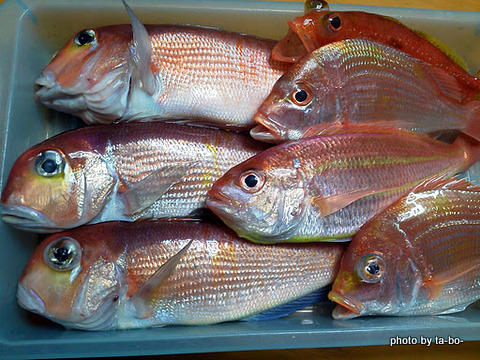 20111112本日の釣果