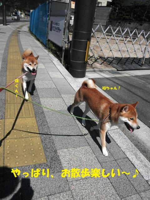 お散歩楽しい!