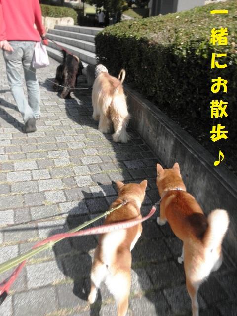 一緒にお散歩