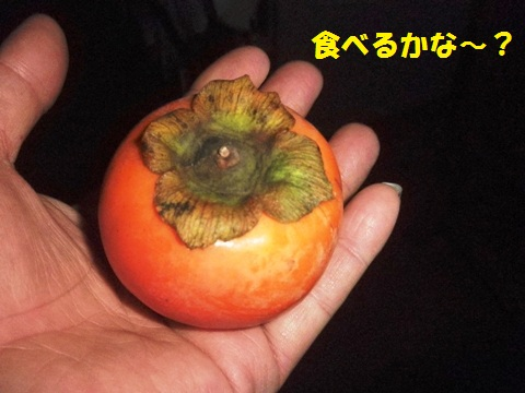 美味しい柿