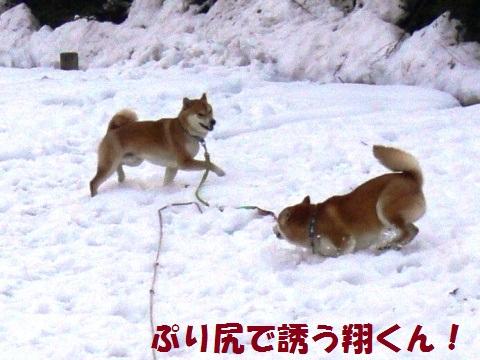 雪遊び プリ尻