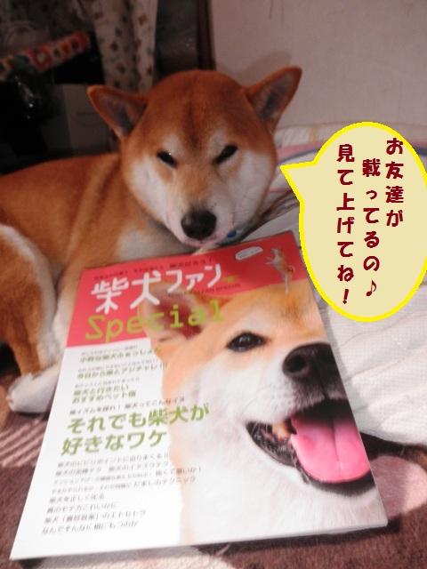 柴犬ファン読んでね!