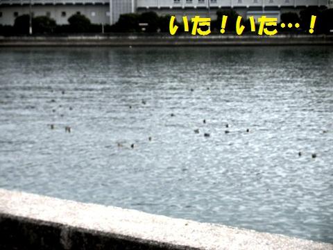 水鳥がいっぱい!
