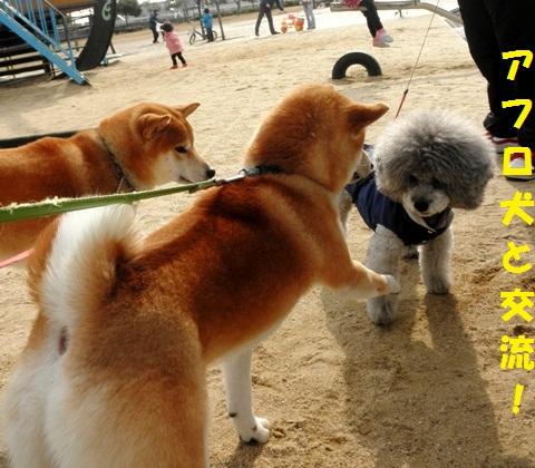 アフロ犬と交流