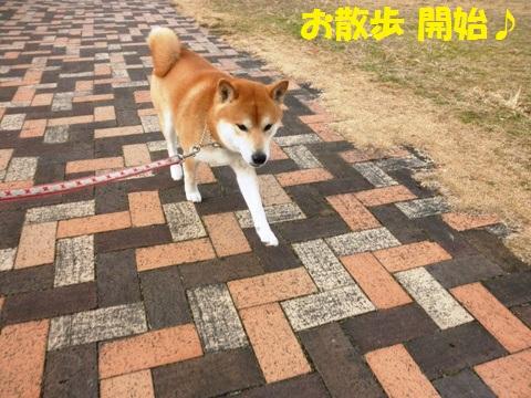 お散歩開始!