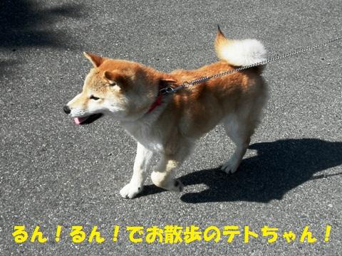 テトちゃんがお散歩