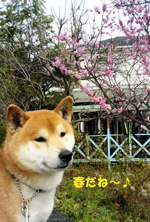 春だね~!