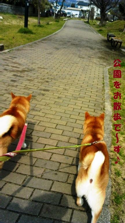 公園をお散歩!